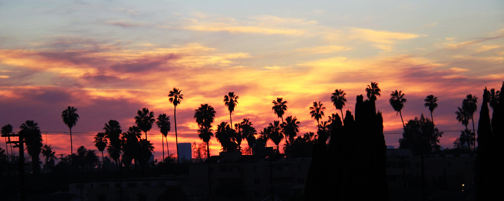 A rich sunset silhouettes the palm trees of Los Angeles.